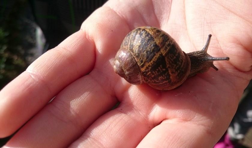 Ontdek de wereld van bodemdieren tijdens de Bodemdierendag, woensdag 2 oktober. FOTO: IVN VEV