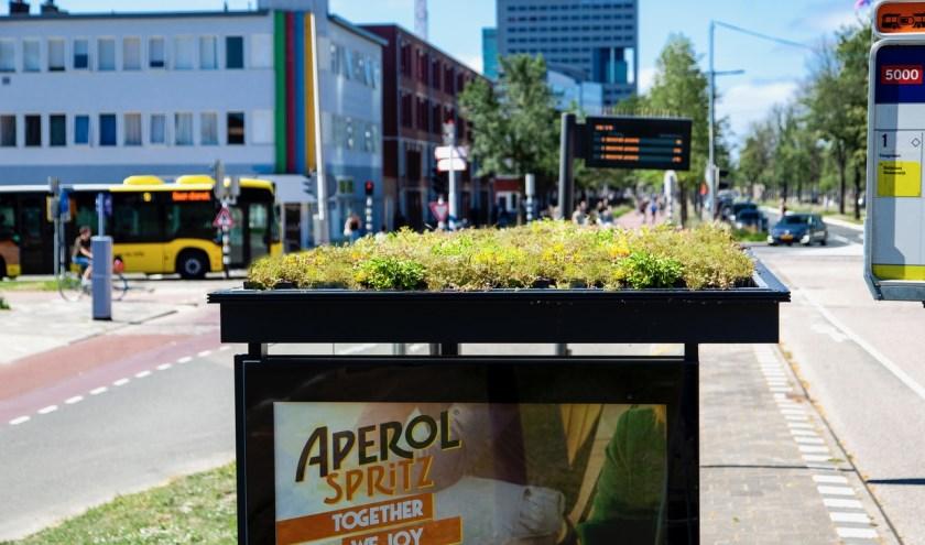 In de stad Utrecht zijn 300 bushokjes verduurzaamd