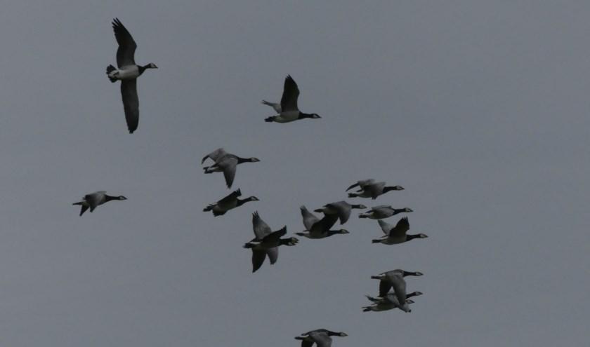 VWG De Kempen komt met een eigen telpost voor het spotten en tellen van de trekvogels.