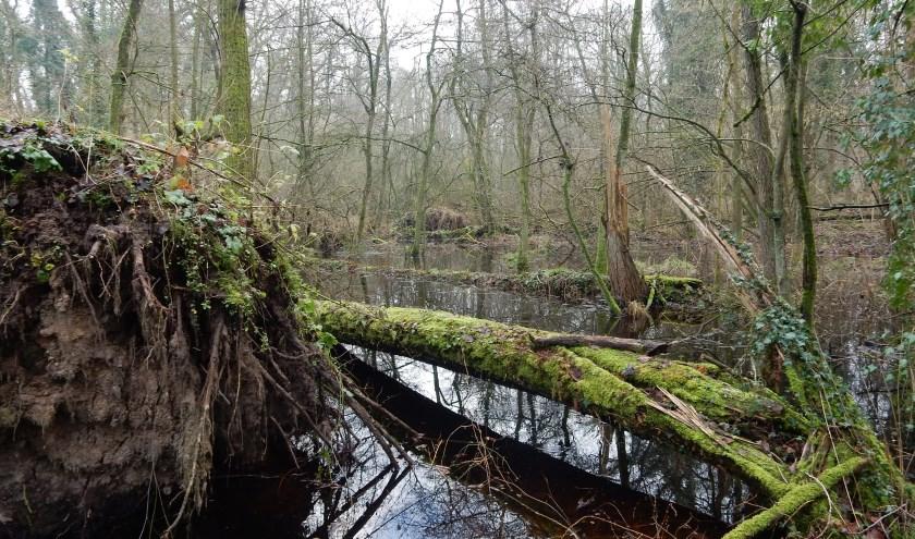 ARK zet vooral in om de natte leembossen, de natuurkroonjuwelen van Het Groene Woud, uit te breiden. Foto: Jos van Ooijen.