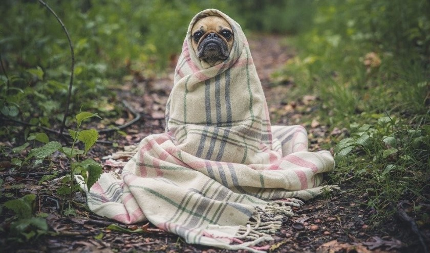 Zonder dekentje is het in de winter helemaal niet lekker buiten...