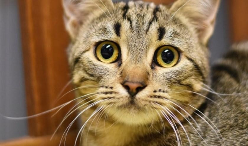 Elke week zet Dierenopvangtehuis De Bommelerwaard een dier in het zonnetje. Deze week heeft het asiel een variëteit aan kittens die allemaal een plekje zoeken.