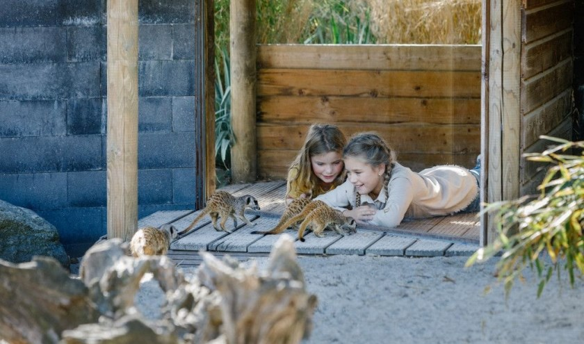 Terwijl de ouders werken, hebben de kinderen plezier in Dierenrijk. Foto: wienekehofland.nl
