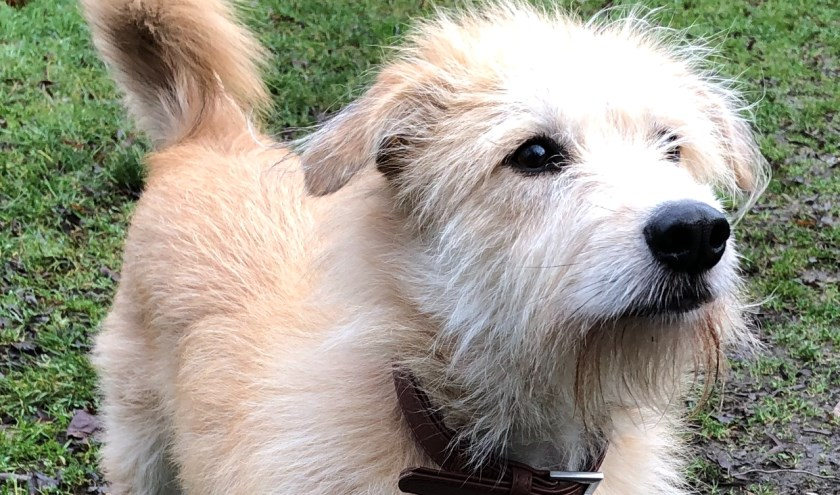 Elke week zet Dierenopvangtehuis De Bommelerwaard een dier in het zonnetje. Deze week is dat Marieta. Kijk voor meer informatie op www.dierenasiel-bommelerwaard.nl.