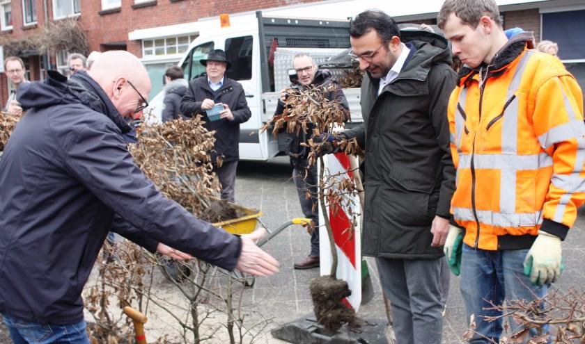 Wethouder Yasin Torunoglu (tweede van rechts) helpt een handje mee met het verplanten van de beukenhaag. (Foto: Rob Weekers).
