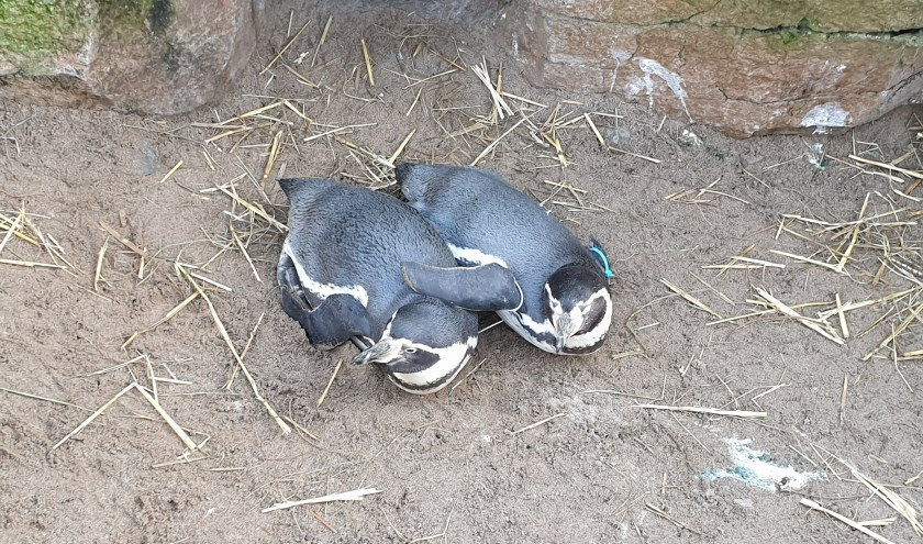 Locke en Kiki liggen in elkaars vleugels uit te rusten