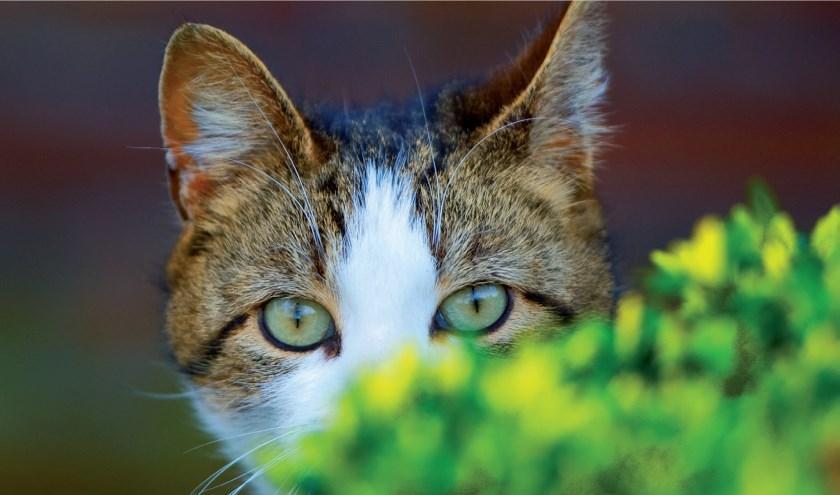 De buitenkatten hebben genoeg aan een droge slaapplek en dagelijks wat te eten en drinken. Foto: Dierenbescherming.