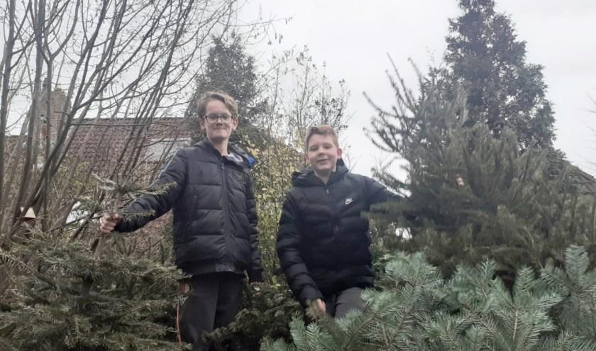 Links: Milan Ortgiess en Justin Gardenier poseren hier trots tussen de door hen verzamelde 110 kerstbomen. Een goede daad en bovendien: Kassa voor de eigen spaarpot