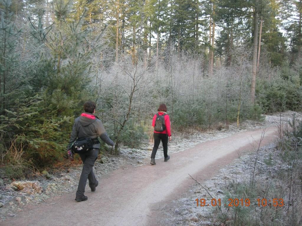 Prachtige winterse bossen Foto: Hennie Hanekamp © DPG Media