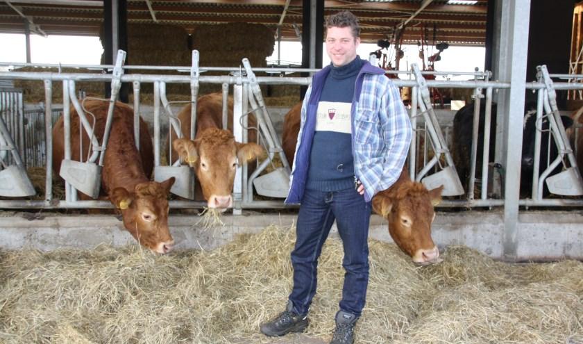 Wouter tussen zijn hoogdrachtige Limousin koeien die in de potstal staan - https://zorgboerderijnieuwtoutenburg.nl/