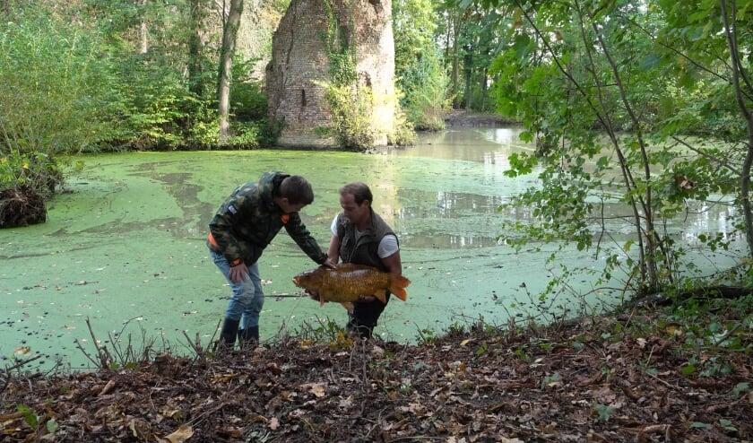 <p>Joris Grauss en Walter Kooijman zette zich in om de meer dan 50-jaar oude karpers te redden op Landgoed Brakel, maar door de slechte waterkwaliteit was dit helaas niet mogelijk.</p>