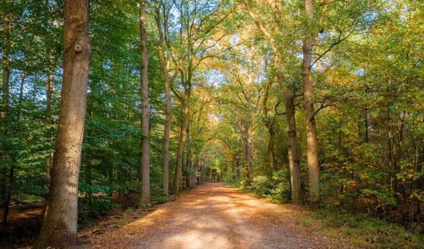 <p>Wandelen in het bos, altijd een goede manier om in beweging te blijven.</p>