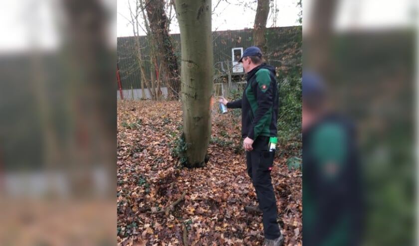 <p>Onlangs zijn de bomen die gekapt moeten op de Joodse begraafplaats gemarkeerd. (foto: PR)</p>