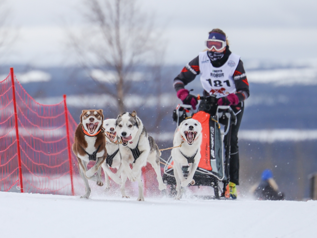 In Zweden wonnen Mariet en haar honden een zilveren medaille tijdens het Europees Kampioenschap. FOTO: Niclas Nordlund Photography Foto: NICLAS NORDLUND PHOTOGRAPHY © DPG Media