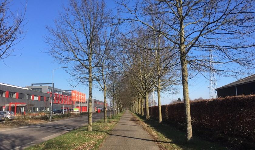 Vooral op plekken waar veel publiek komt, zoals fietspaden, zal de eikenprocessierups bestreden worden. (foto: Karin van der Velden)