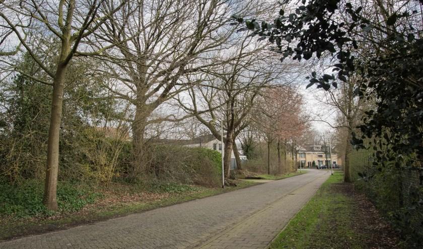 Een aantal zeer oude bomen langs de Gossecstraat lijkt nog te stammen uit de tijd van de Stokhasseltsekerkstraat. (foto: Theo van Etten)