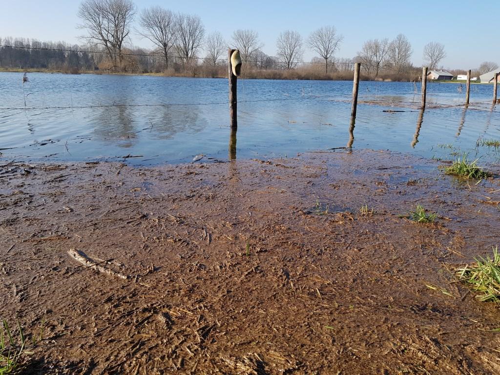 """""""Vanwege het hoge water in de Poederoijsehoek is het Klompenpad nu tijdelijk een nattevoetenpad geworden"""", aldus Jan Verhoeks uit Poederoijen.  © DPG Media"""