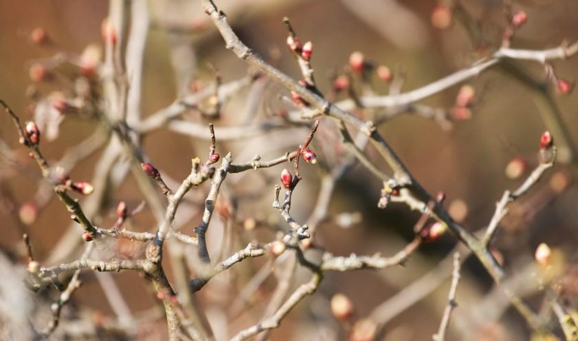 Waarom zijn er geen bloemen in de winter? (foto: Annabelle Kubler - Coocooa)