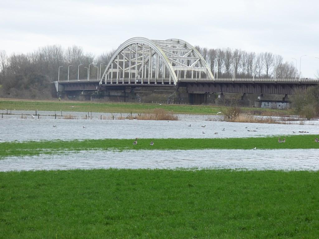 Kwelwater in de weilanden bij Hedelse brug. Petra van den Bogaard uit Hedel maakte deze foto afgelopen zondag.  © DPG Media