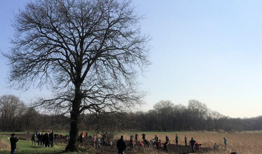 Het voedselbos is een deel van het project 'Dorpsmoestuin Vessem'.
