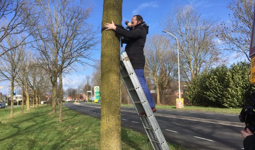 Oscar van Leeuwen ging ook zelf de ladder op. Met een elastieken band hangen de kastjes aan de boom. (foto: Karin van der Velden)