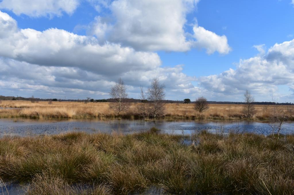 Het water is weer terug op het Wierdense Veld. Foto: Jolien van Gaalen  © DPG Media