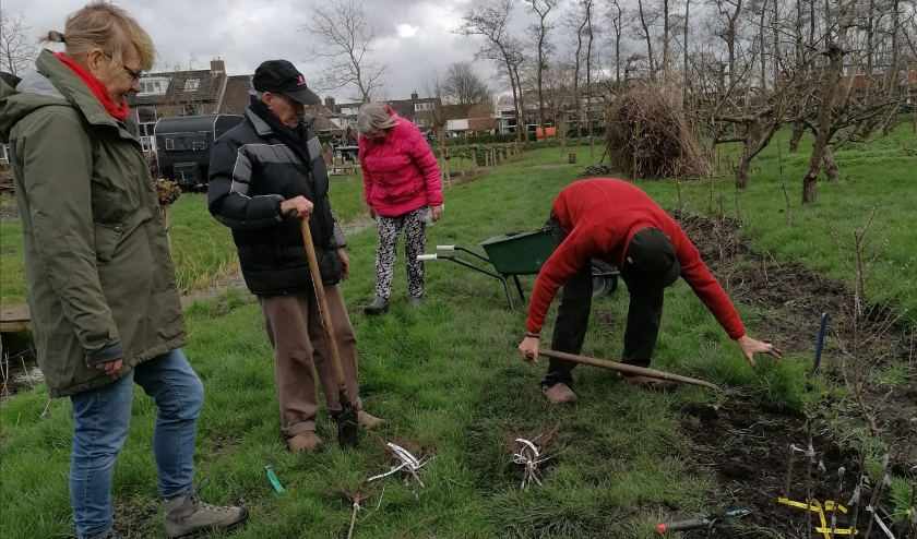 Vrijwilligers Voedselbuurtbos Geuzegroen planten boompjes Oranje Fonds op Wijktuin Zegwaartseweg. Desh Chisukulu