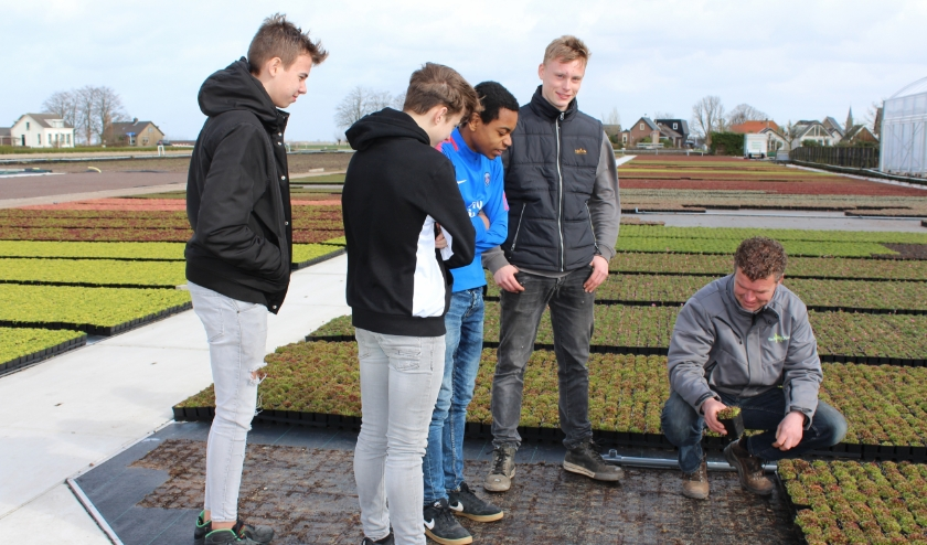 Kweker Daan van der Wolf, met naast hem Patrick Verbeij,  toont zijn rotsplantenkwekerij aan de scholieren.