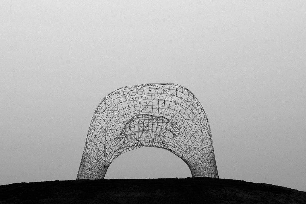 Cage wirh no puma in Foto: Rudy Blom © DPG Media