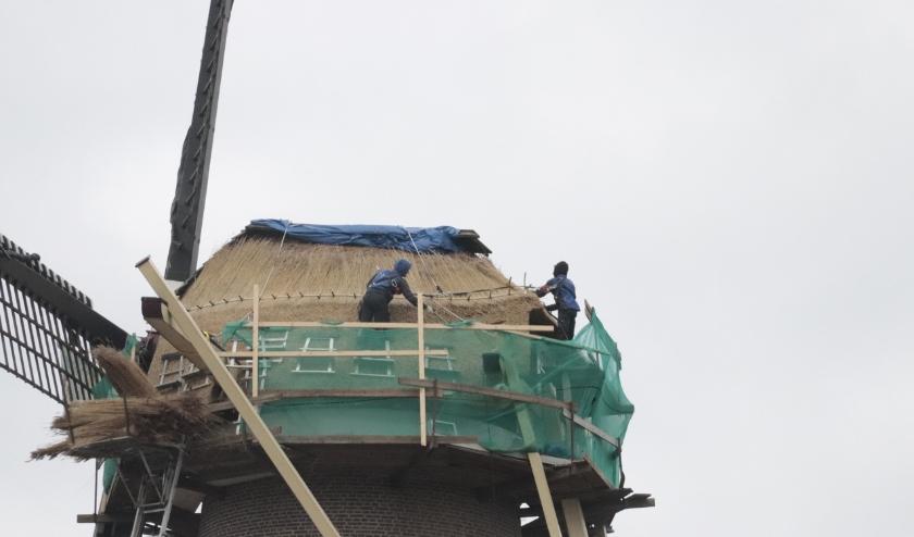 Het is gevaarlijk werk wat de rietdekkers op het dak van stellingmolen De Hoop verrichten.