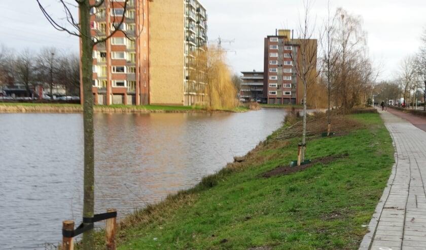 <p>Jonge bomen langs de waterkant. (Foto: Dick Wevers)</p>