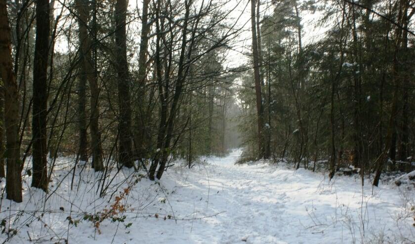 <p>Het bos op Prattenburg is in deze tijd van het jaar werkelijk betoverend, zeker als er sneeuw ligt! (Foto: Aly van Eijk).</p>
