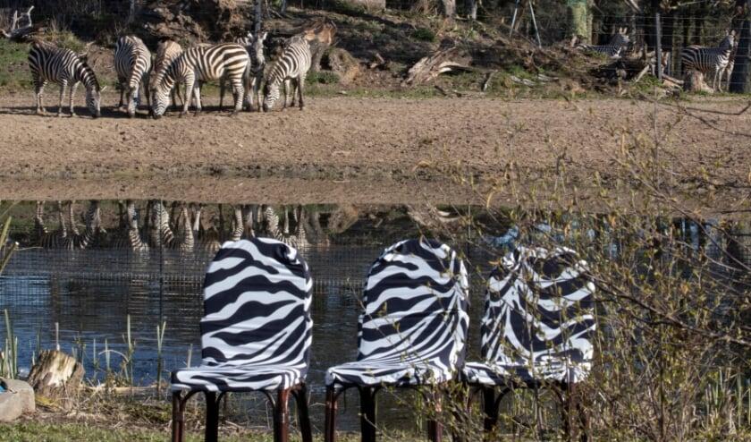 Zebra en zebraprint