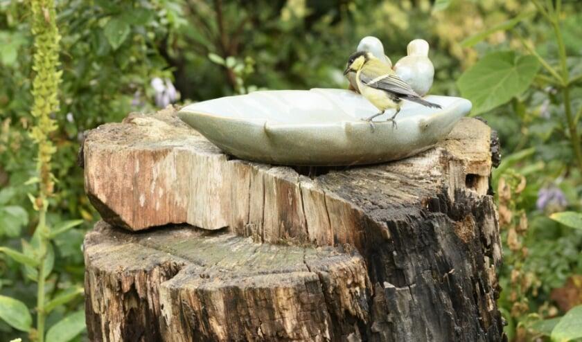 <p>Ook vogeltjes willen lekker badderen nu de zomer is begonnen. Maak jij ook een eigen vogelbad?</p>