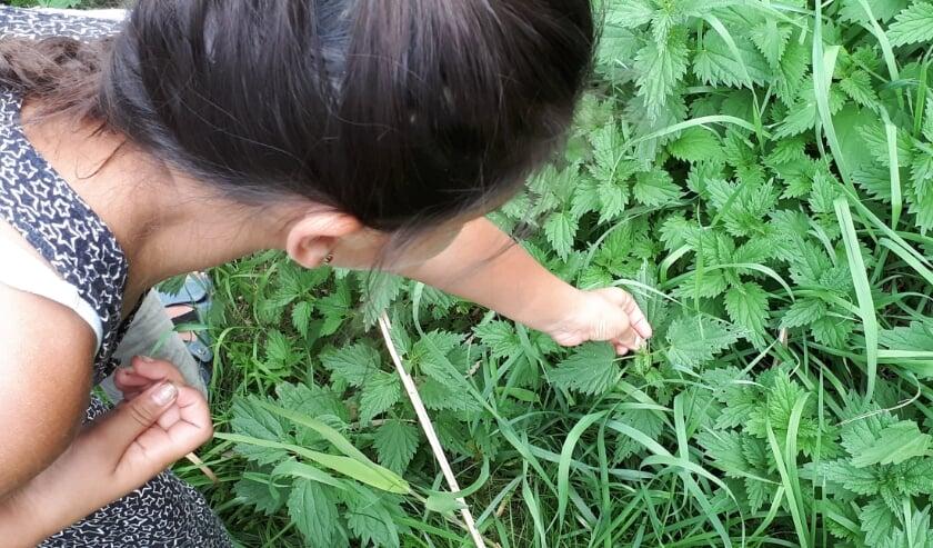 <p>Spelen in de natuur is leuk en gezond, zegt Groen doet goed.</p>