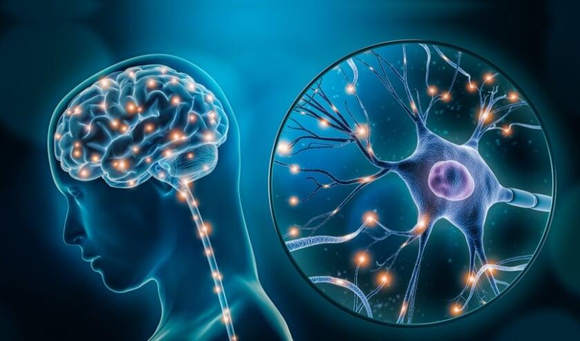 Illustratie van neuronen in je hersenen.
