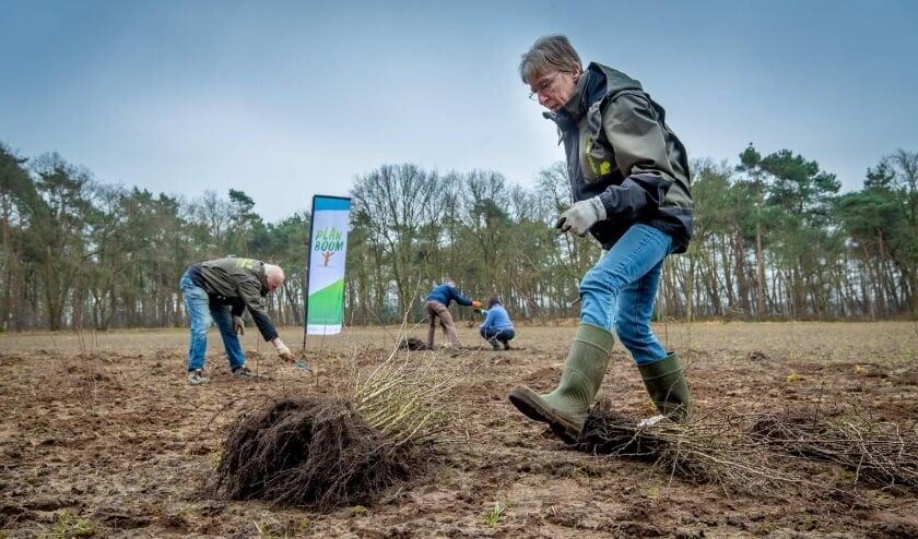 <p>Vrijwilligers van IVN Veldhoven Eindhoven Vessem planten ruim 325 jonge bomen. (Foto: BMF, Erik van der Burgt).<br><br></p>