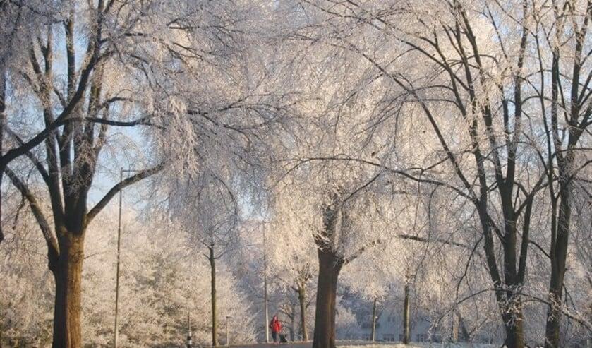 Tuindorp Vreewijk in wintertooi