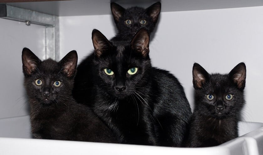 <p>Onyx tussen haar kinderen. De kleintjes hebben inmiddels een huisje, nu de moeder nog. Foto: Eva Kresler</p>