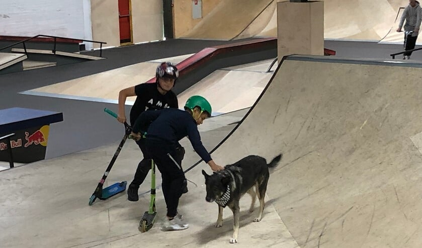 <p>Overdag let Doekie er in Skateland een beetje op dat de kinderen geen al te gekke dingen doen.</p>