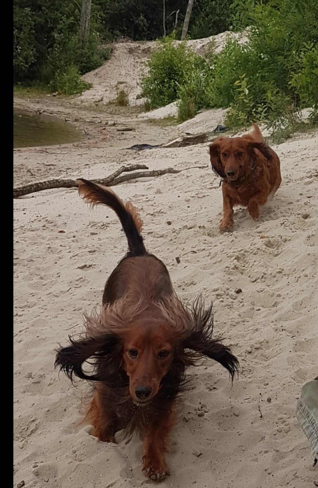 Judah & Doris (Sarah Schepers-Steenbakkers)  © deMooiLaarbeekkrant