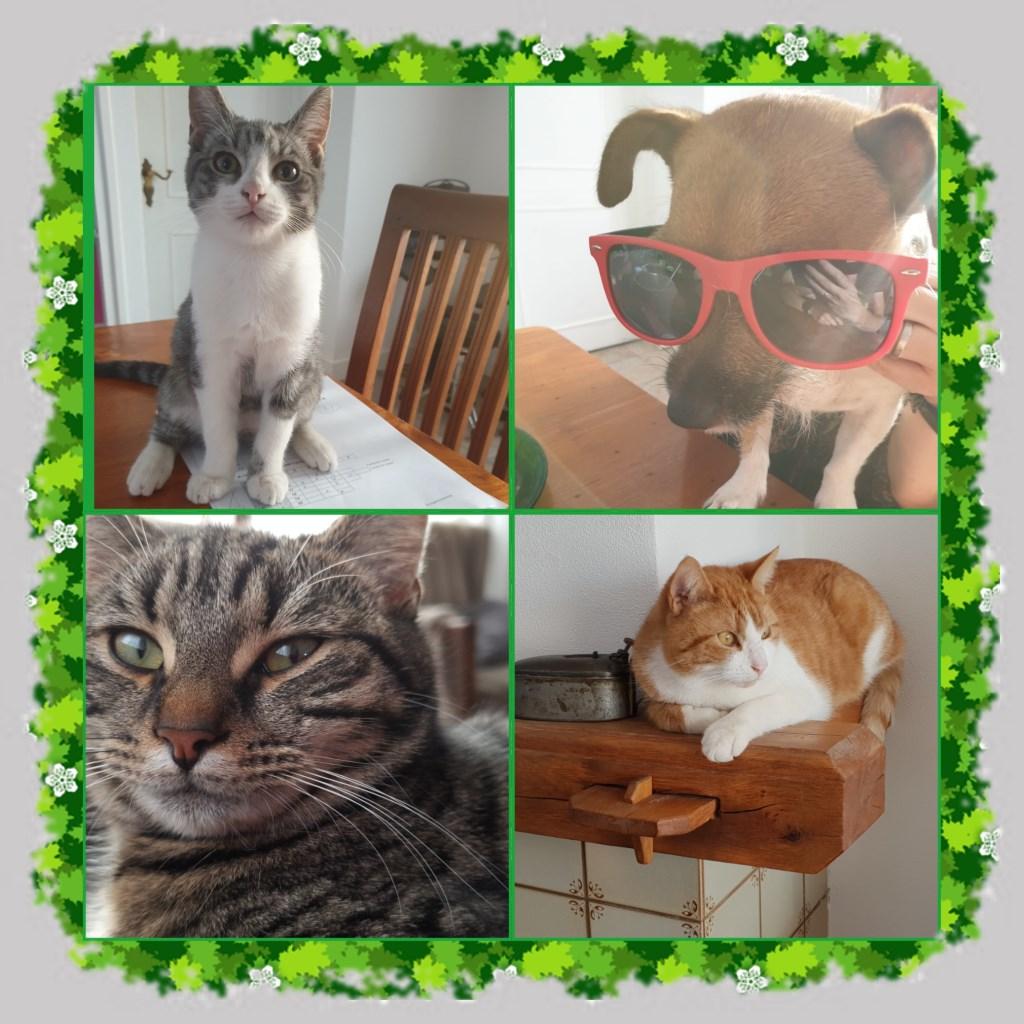 Een collage van ons kwartet: Bruce - Dave - Teun – Binky (Marga van den Heuvel)  © deMooiLaarbeekkrant