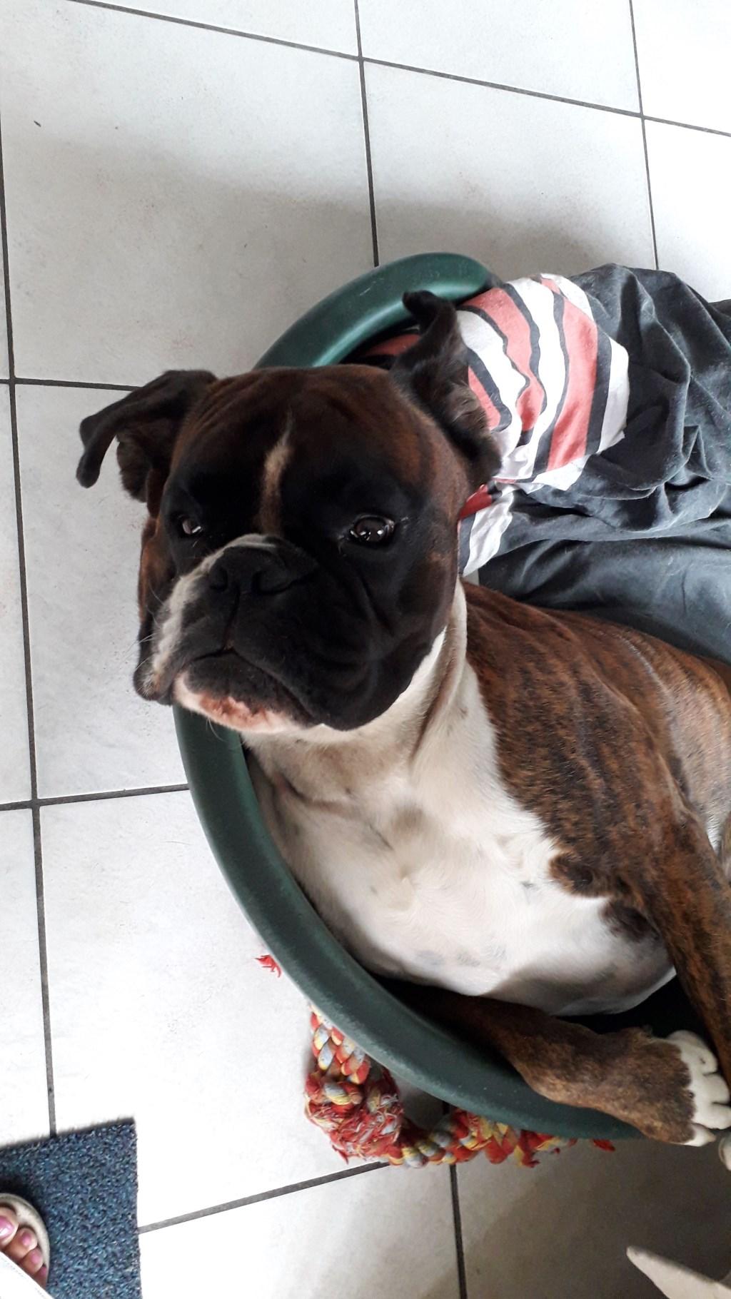 Dit is Tygo hij is dol op spelen maar van al dat spelen word je moe en moet je even uitrusten. (Familie Dekkers)  © deMooiLaarbeekkrant