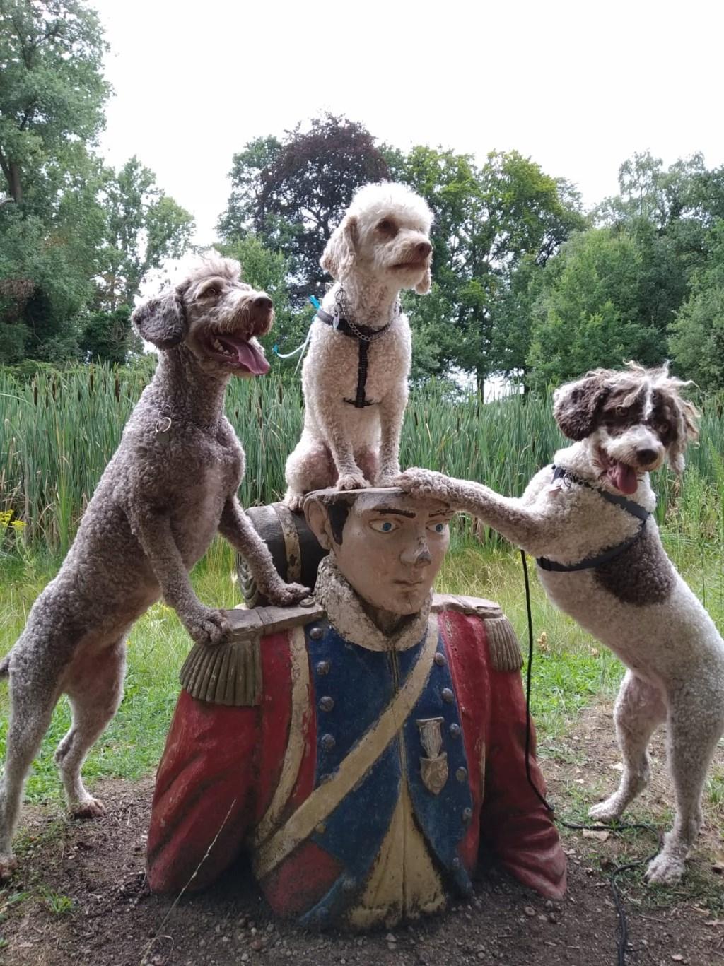 Met de hondjes nog eens terug naar Het Land van Ooit (Carolijn Bouw)  © deMooiLaarbeekkrant