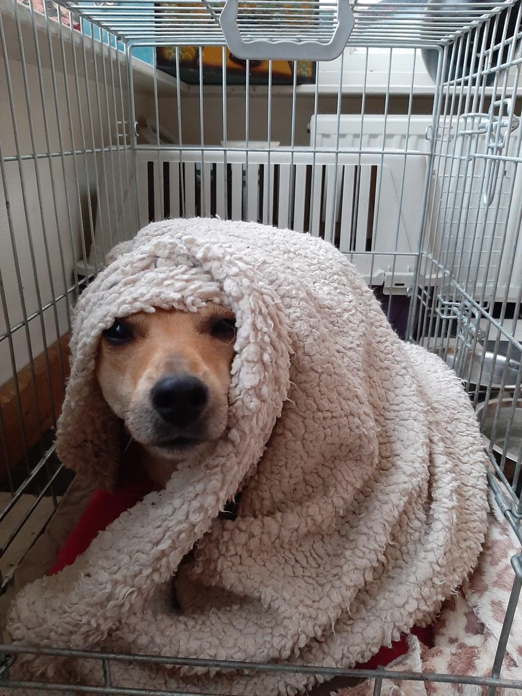 Onze hond Wolfje. Die lijkt te willen zeggen: 'Huh, is het nu al tijd om op te staan?' (Ludy Weel)  © deMooiLaarbeekkrant