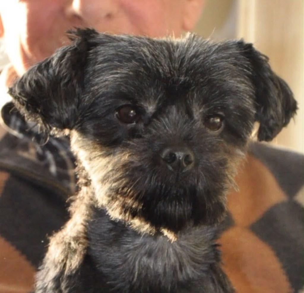 Onze Tooske is een schatje! Al 10 jaar bij ons en nog vinden mensen haar ooit een schattige puppie! Hahaha. Het is een echte knuffelkont.  (Lonneke van Kaathoven)  © deMooiLaarbeekkrant