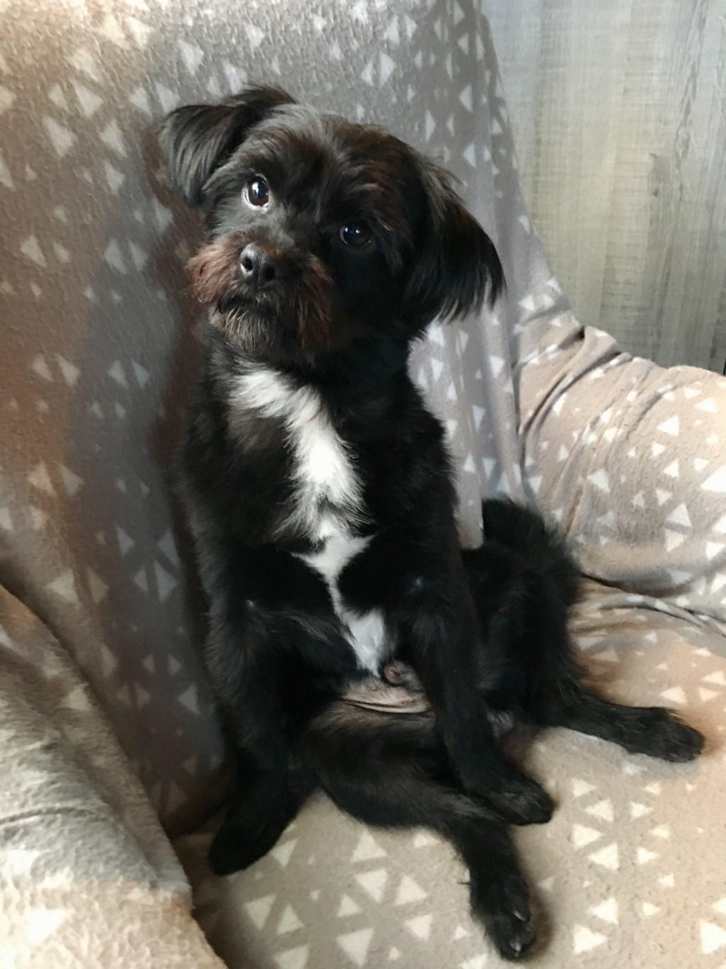 Mijn hondje Cooper (Soraya Biemans)  © deMooiLaarbeekkrant