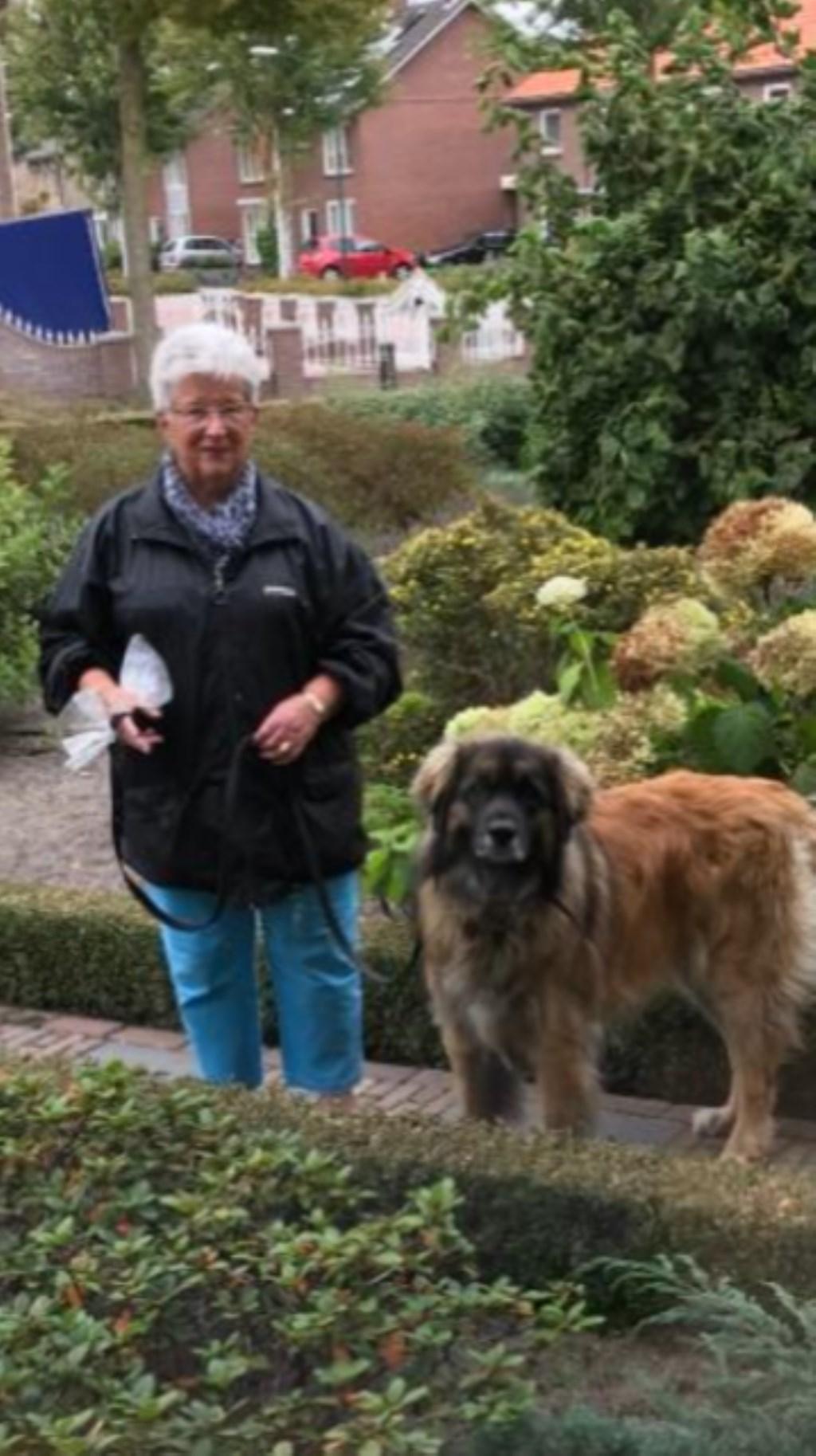 Ik pas wel eens op Kita, het hondje van mijn vriendin! (Wilhelmien van Boxtel)  © deMooiLaarbeekkrant