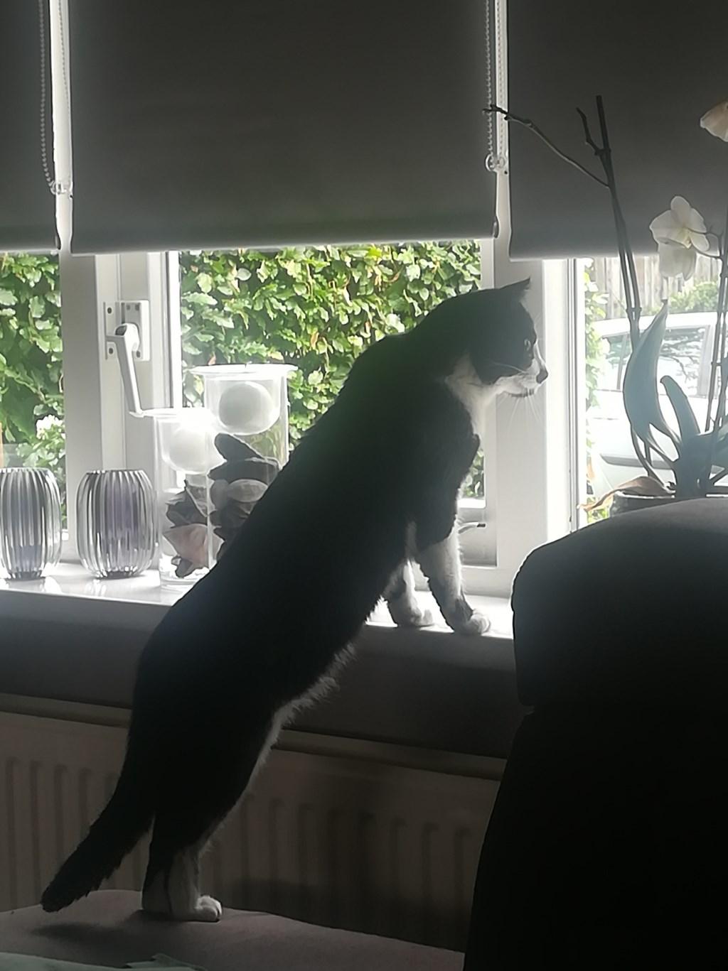 Dit is bailey en hij is helemaal niet nieuwsgierig… (Susan de Wit)  © deMooiLaarbeekkrant