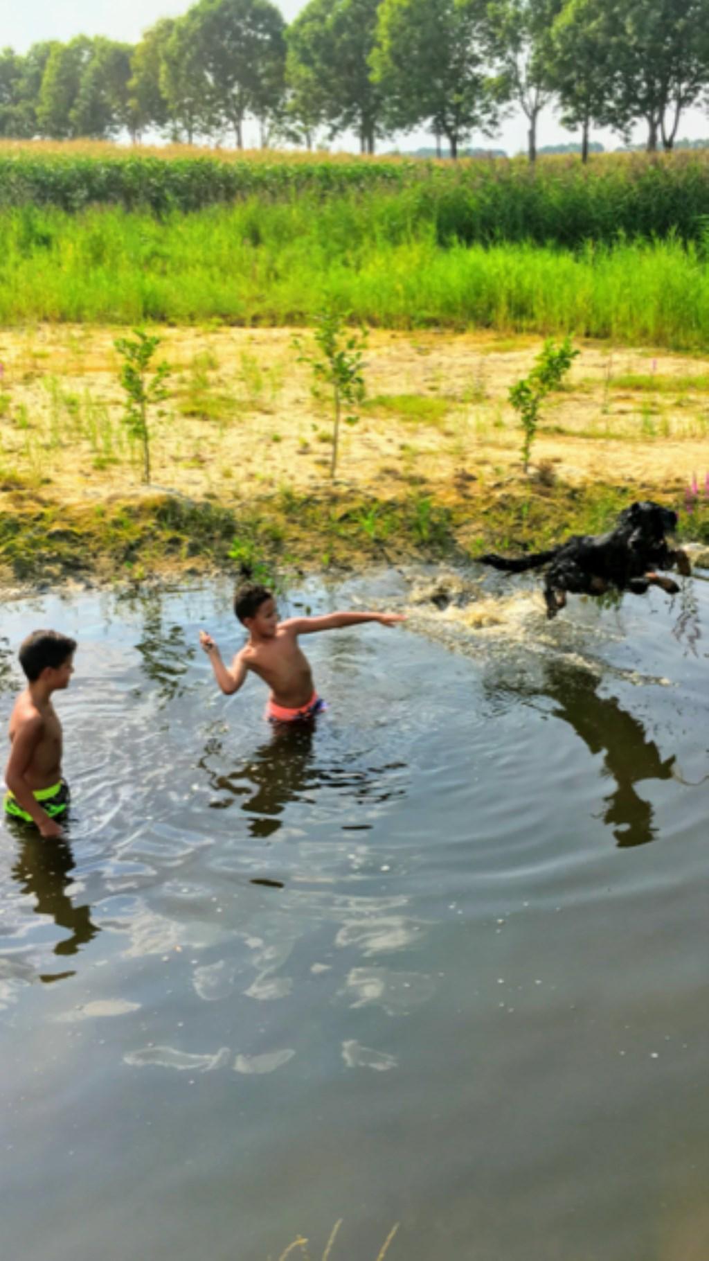 Lekker afkoelen en spelen in de Goorloop! Lemmy maakt een geweldige duik!  (Fam. Hendriks)  © deMooiLaarbeekkrant
